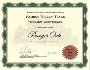 Famous-Tree-of-Texas